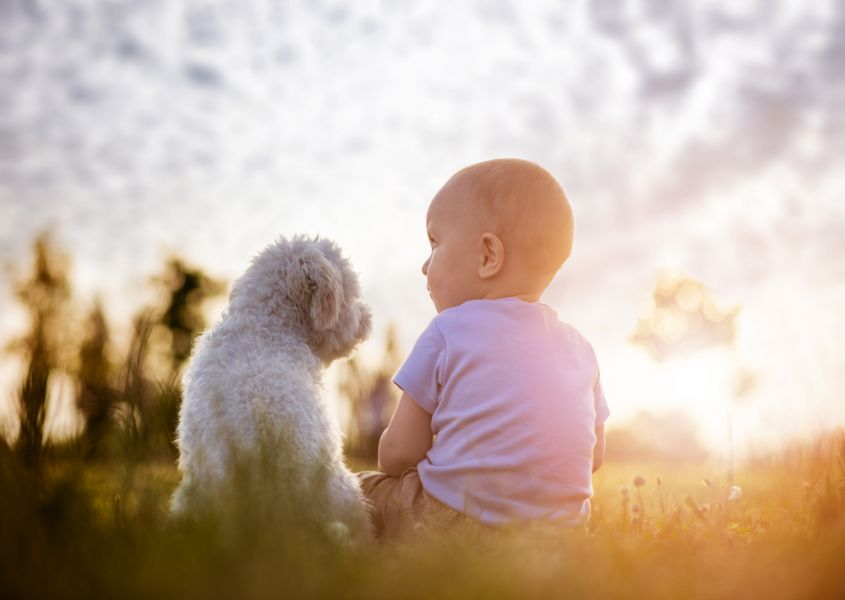 Heartwarming friendship between toddler and dog