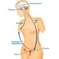 Breastfeeding Menstruation