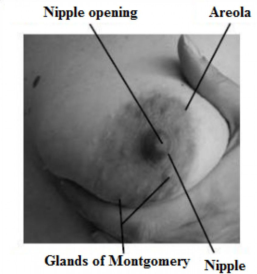Do your nipples get store in early pregnancy